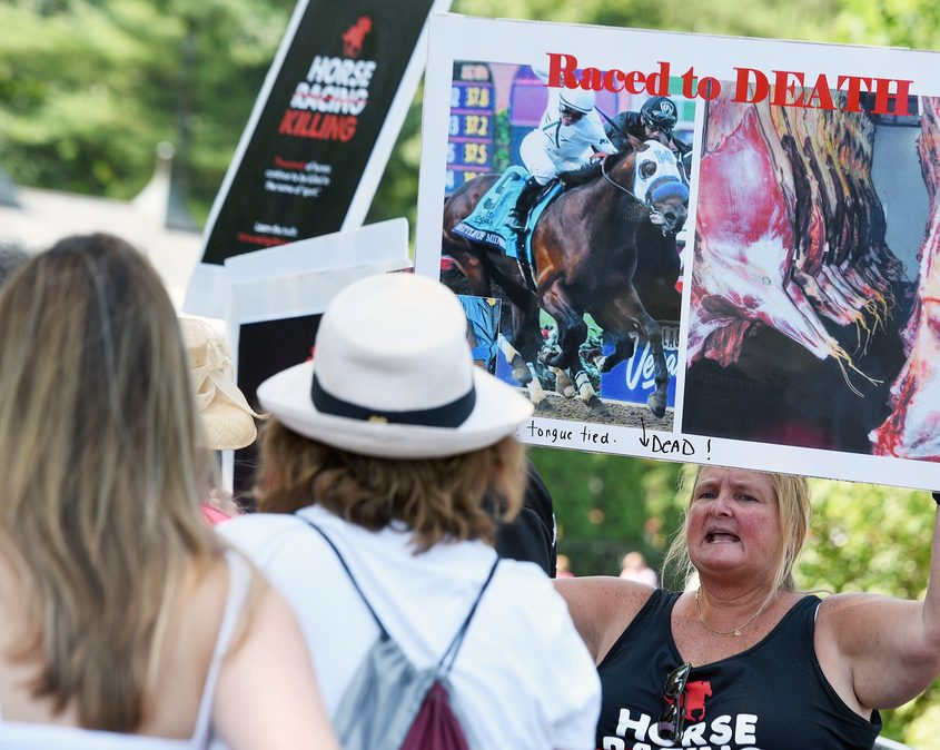 Horseracing Wrongs volunteer Trish Coughlin, of Schenectady, holds signs protesting Saturday at Saratoga Race Course..