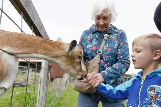Xzavior Travis, 5 of Clifton Park, helps feed a goat with his great grandmother Barbara at Bowman Orchards.
