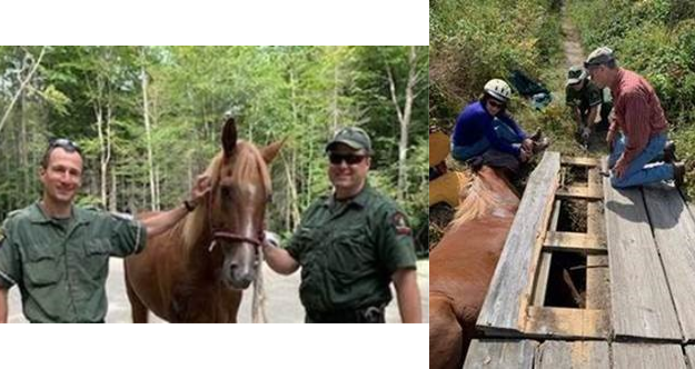 Chance the horse, as he's being rescued and after