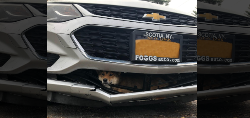 A photo released by police of the dog stuck in the car Monday. Police did not identify the driver and removed the license plate