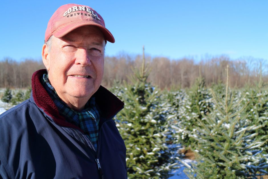 Peter Brooks, owner of Boulder Brook Farm in Malta, stands in a field of Christmas trees on Wednesday, Nov. 13.