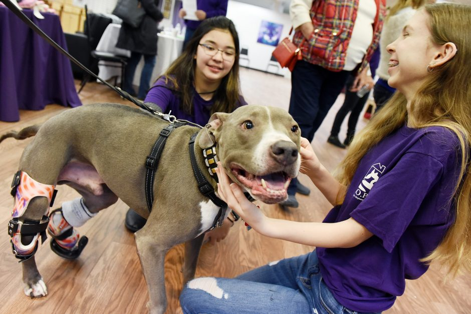 Hudson gets some love from Kyra Mertens, 14, of Schenectady, right, and Azlyn Belisle, 16, of Saratoga Springs at H.O.P.E.