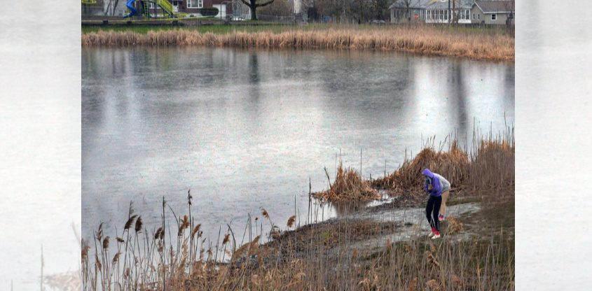 People look for alligator tracks in the mud along a partial shore at the Steinmetz Park pond on Lenox Road