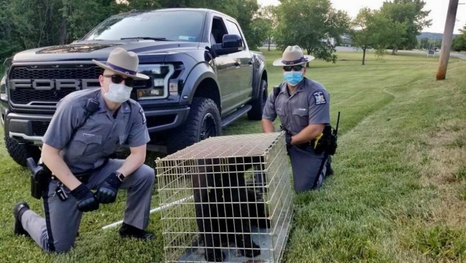 State police and the bear cub