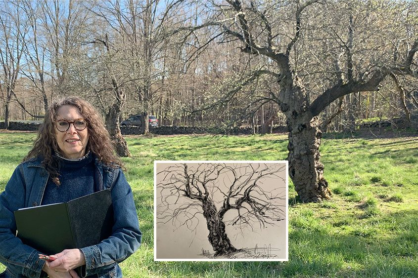 Artist Susan Story stands by the apple tree she'll be basing her project on. Inset: Her first sketch of the tree.