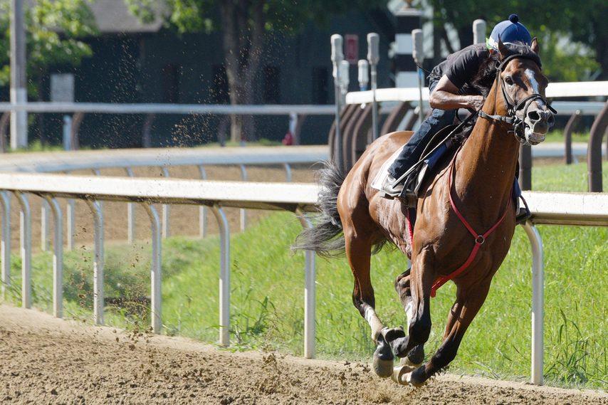 Bodexpress and exercise rider J.J. Delgado breeze five furlongs on the Saratoga main track Monday morning.