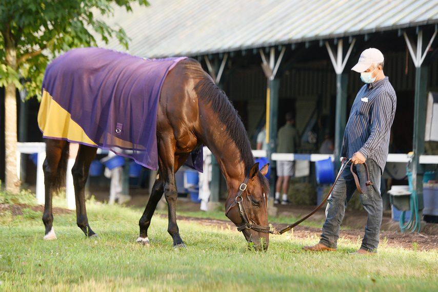 Tom's d'Etat grazes outside his stall at trainer Al Stall's barn on the Saratoga backstretch.
