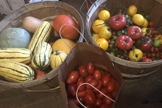 Bags and bins of tomatoes and squash leave the house resembling a produce warehouse. (Margaret Hartley)