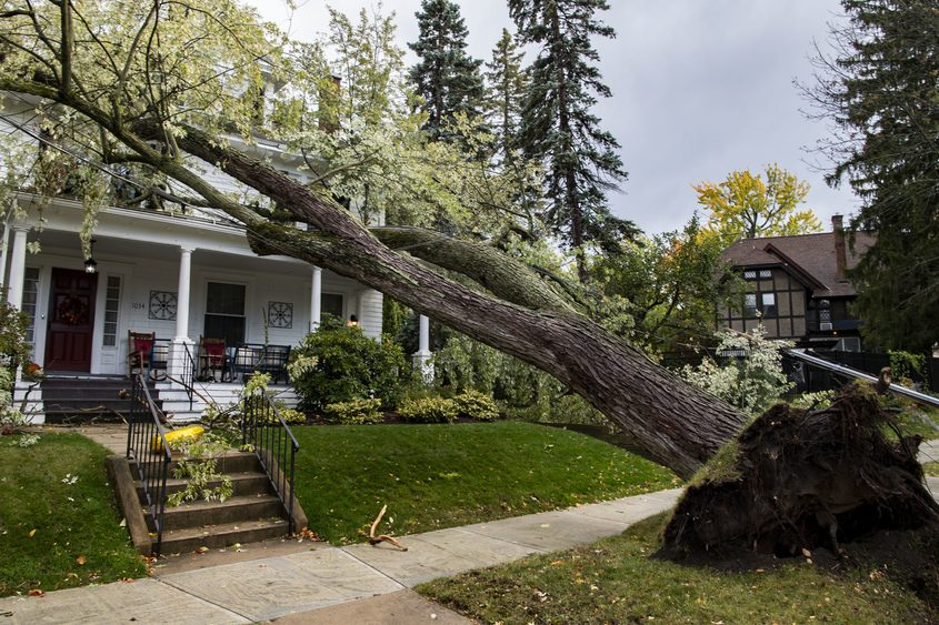 A fallen tree lays across the roof of 1034 Ardsley Avenue in Schenectady Wednesday