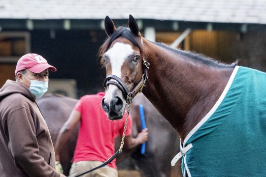 ERICA MILLER/STAFF PHOTOGRAPHER Tiz the Law after breezing at Saratoga Race Course on Aug. 23.