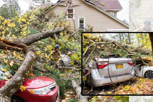 The fallen tree on Birchwood. Credit: Peter R. Barber/Staff Photographer
