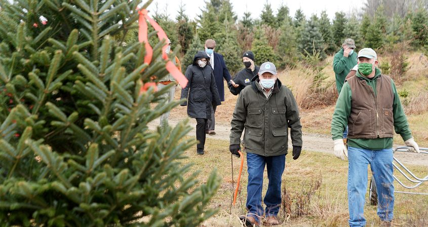 New York Agriculture and Markets Commissioner Richard Ball and Goderie's and co-owner Pete Goderie, of Galway, make their way to cut down the tree Monday