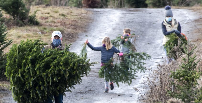 Adam McNeil of Saratoga Springs carries his freshly cut Christmas with his family Sophie, 7, Calum, 6, and Jennifer McNeil at Goode Tree & Wreath Farm Saturday.