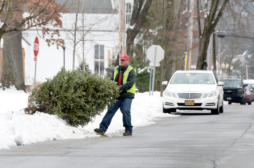 Saratoga Springs DPW laborer Philip Costello loads Christmas trees on Greenfield Avenue. ERICA MILLER/THE DAILY GAZETTE