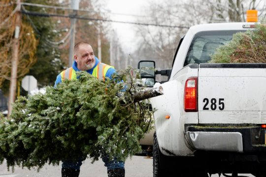Saratoga Springs DPW laborer Dan McLellan loads Christmas trees on Second Street in Saratoga Springs Tuesday.