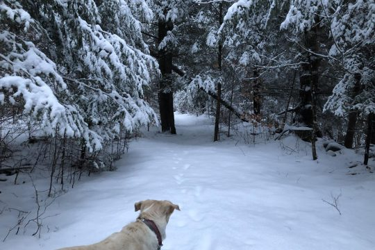 The winter woods are full of tracks -- our own, and those of deer and rabbits.