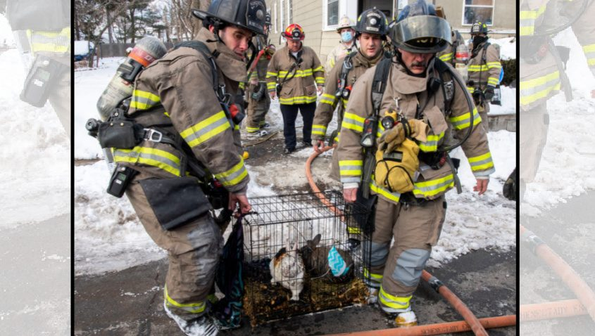 Schenectady firefighters Lt. Shaun Burns and Lt. Christoper Apa carry 2 injured rabbits to safety after a fire on the back porch of 1307 Jerome Ave. Thursday.