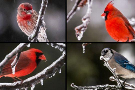 Some area birds Tuesday morning
