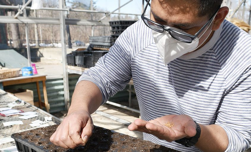 Sustainable Living Center and Greenhouse from Cornell Cooperative Extension grower Hassleer Jacinto, of Colonie, plants eggplant seeds Monday