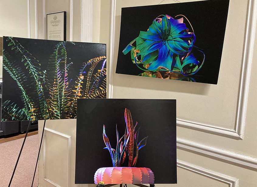 """Photos from the """"Botanic Fashion"""" series by Krystal Einarsson as part of """"The Inspiring Women Project"""" at YWCA NorthEastern NY."""
