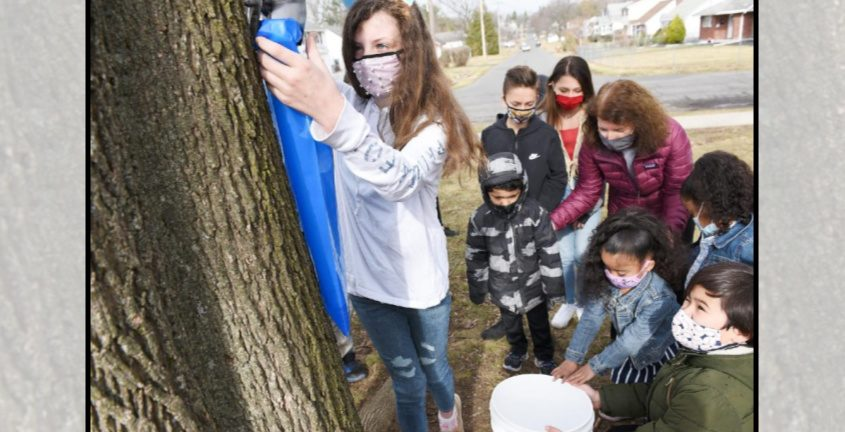 Fifth-grader Karlie Burkette, 10,empties maple sugar water from a tree as kindergarten students watch duringa lesson on making maple syrupat Zoller Elementary in Schenectady on Wednesday.