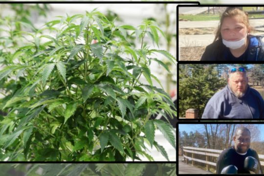 Top right to bottom right: Sabrina Whitman, Samuel Slick and Derrick Cole; Left: A marijuana plant - Brian Lee (right insets) File (left)