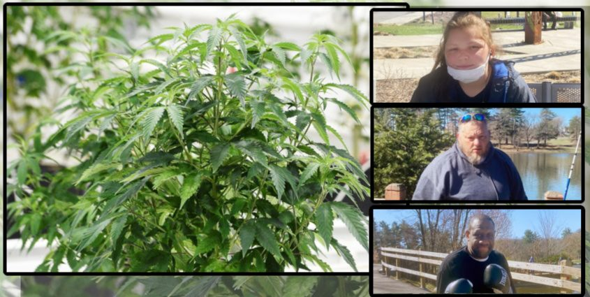 Top right to bottom right: Sabrina Whitman,Samuel Slick andDerrick Cole; Left: A marijuana plant - Brian Lee (right insets) File (left)
