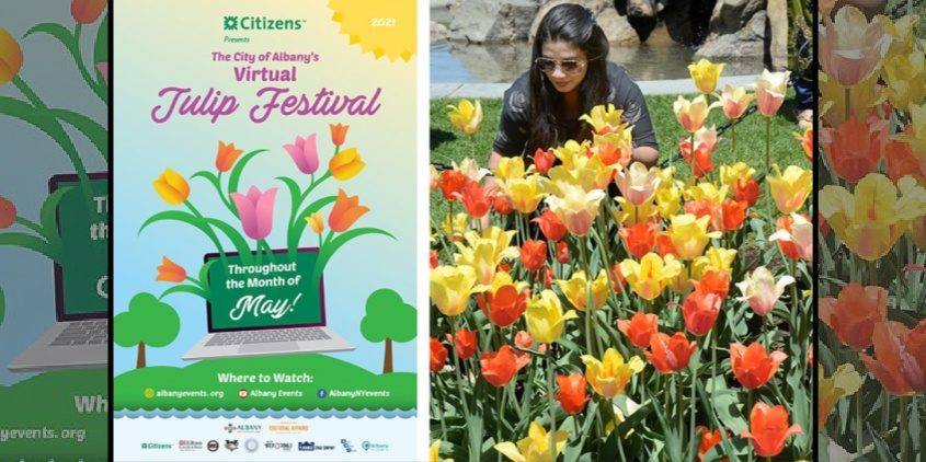 Shown are this year's Albany Tulip Festival poster by Lee Dixon and a Gazette file photo from a past festival.
