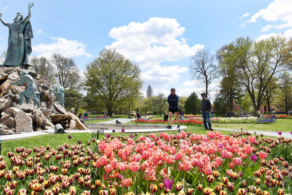 People view the tulips in garden beds during the Albany Tulip Festival last year. Events were virtual in 2020 and will be again this year.