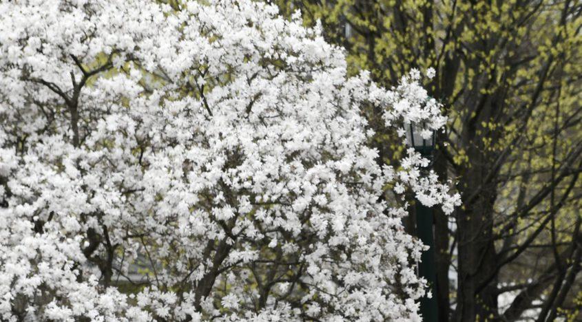 042419-trees-07