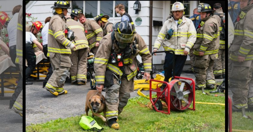A firefighter leads the rescued dog away from the home Tuesday.