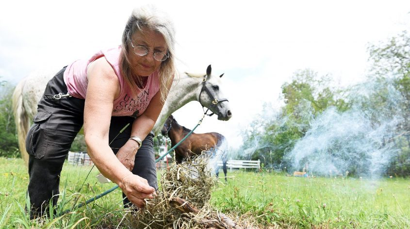 With her horses Misty Field of Justice, front, and Serephim, Chris Wildponies Cameron lights a fire inside a prayer circle ahead of using the ancient Native American practice of smudging to eliminate the Gypsy Moths on her Glenville property on Wednesday.
