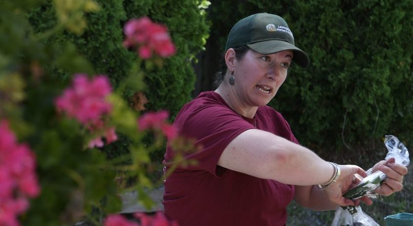 Jessica Lansing helps a customer with a purchase of blueberries at the Niskayuna Farmers Market in this photo from July 2019.
