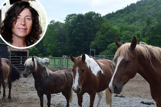 Mary DeBonis, inset, and some of the horses at her Mustang Valley Sanctuary in West Fulton, Schoharie County.