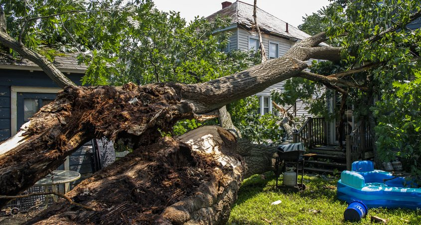 Amassive tree limb came down on Joe Rizzo's home at 116 6th St. in Scotia Tuesday night in Scotia, seen Wednesday.