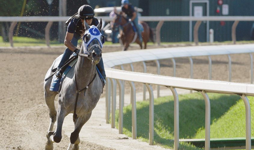 Belmont Stakes' winner Essential Quality ridden by exercise rider Jose Gallego, trained by Brad Cox, breezes on the main track at Saratoga Race Course on July 10. He is the favorite in Saturday's Jim Dandy, post time at 5:39 p.m.