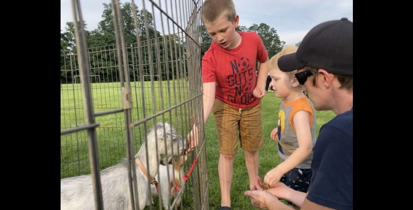Nick Bleau feeds a goat as his little brother Jackson and dad, P.J. Bleau, look on at Rotterdam Night Out Tuesday.