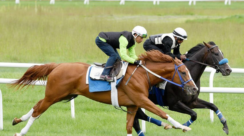 King Fury, left, works in company with Fighting Seabee on the Oklahoma turf training course last Sunday.