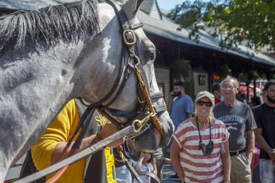 Patrons watch the horses enter the paddock for the 5th race at Saratoga Race Course in Saratoga Springs on Monday, September 6, 2021.