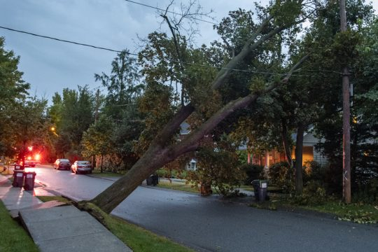 A large tree came down onto primary power lines in front of 101 Ray St. in Niskayuna shortly before 6:30 a.m. Friday.