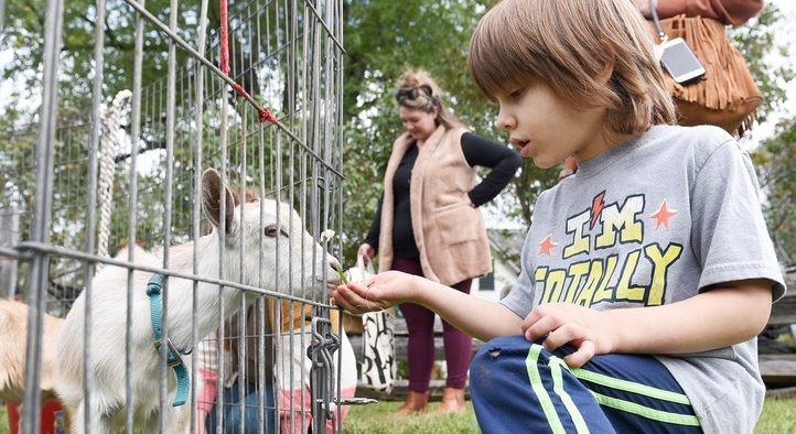 Colden Carucci, 5 of Rexford, feeds a baby goat.